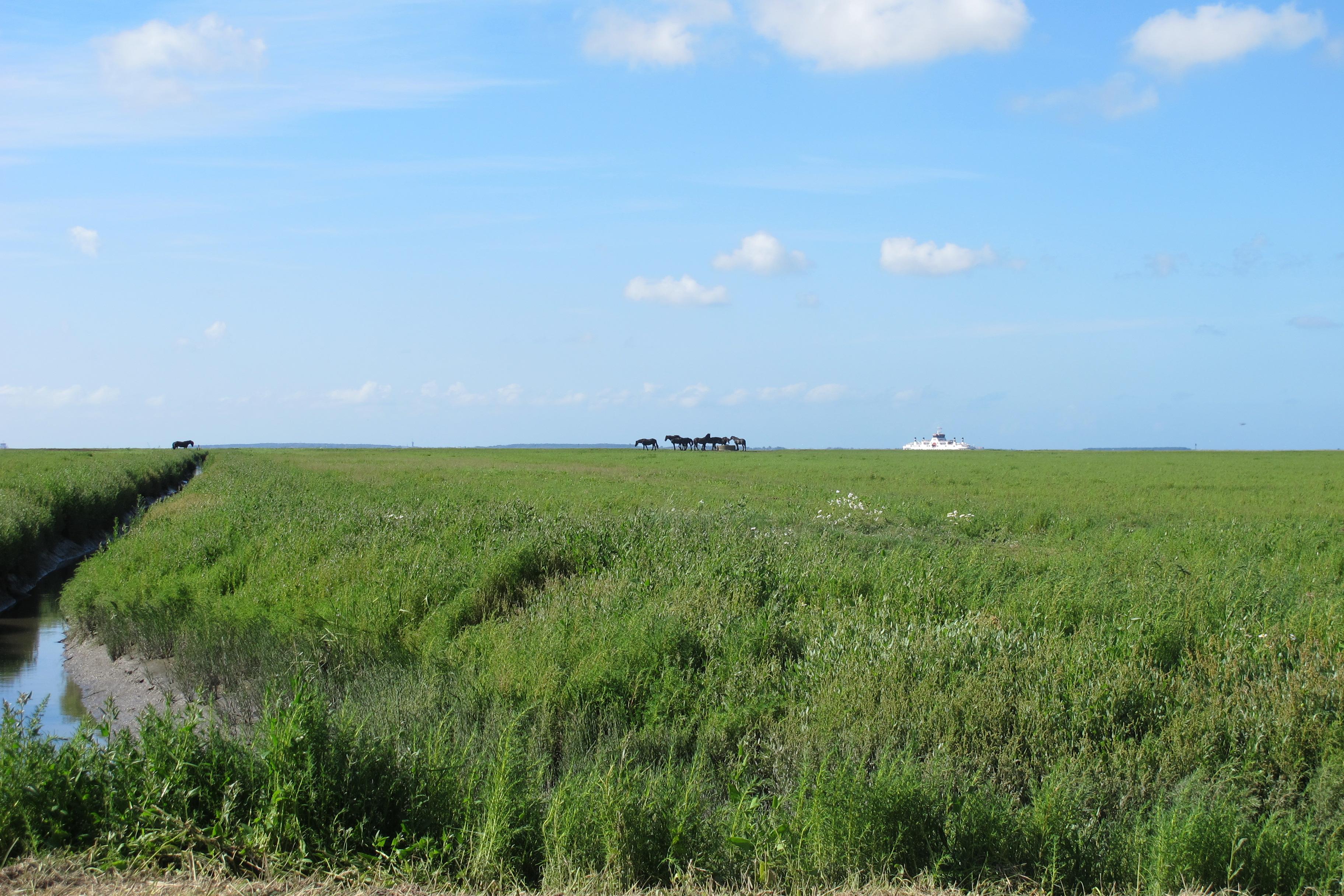 De Friese Waddenkust is een van meest ongerepte gebieden van Nederland en staat op de Unesco Werelderfgoedlijst